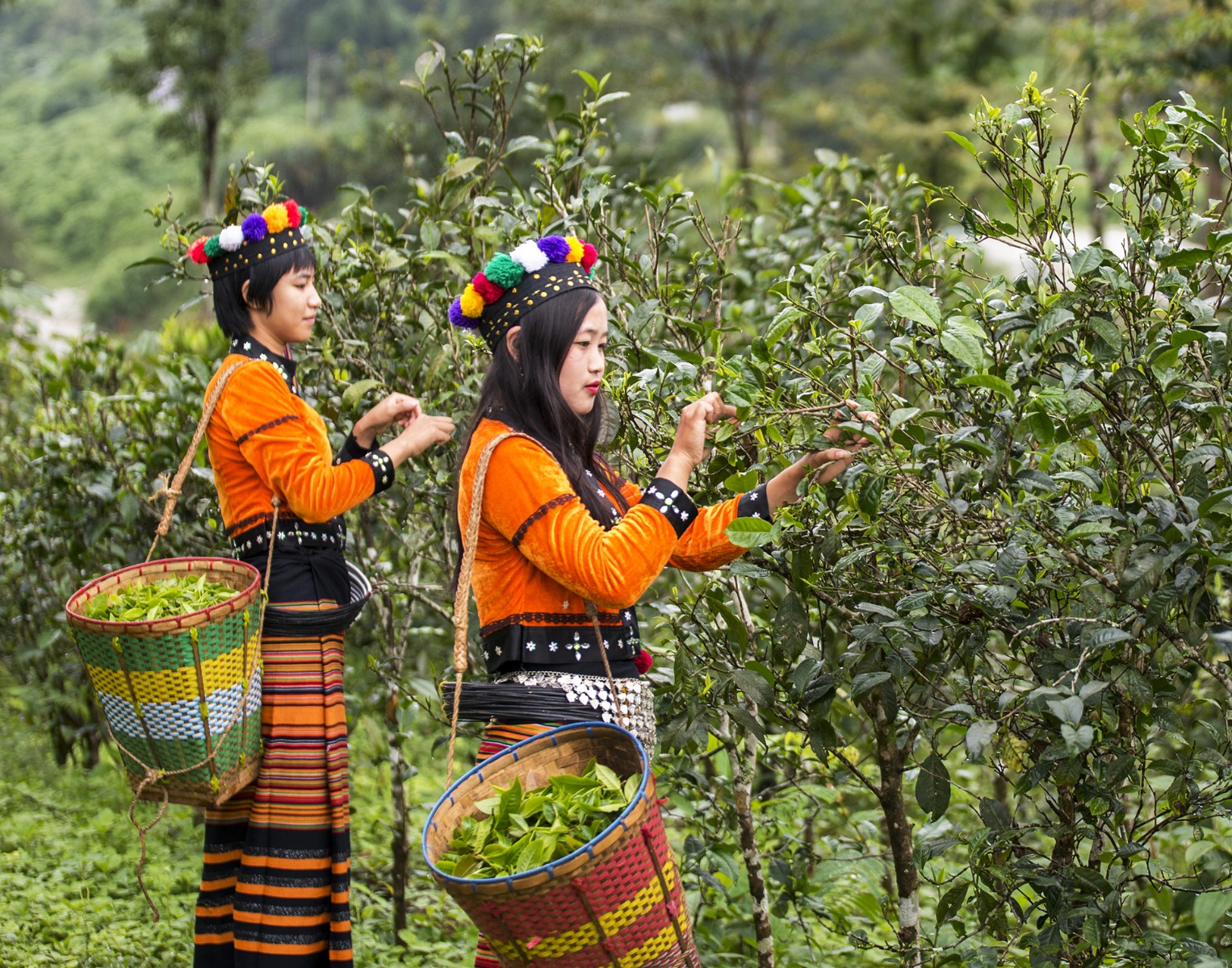 Mogok Tea Pickers - Ceremonial Dress